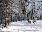 winter-1065394__180