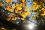 leaves-1030938__180