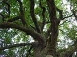 tree-893272__180
