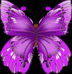 butterfly-154673__180