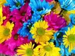 daisies-54663__180
